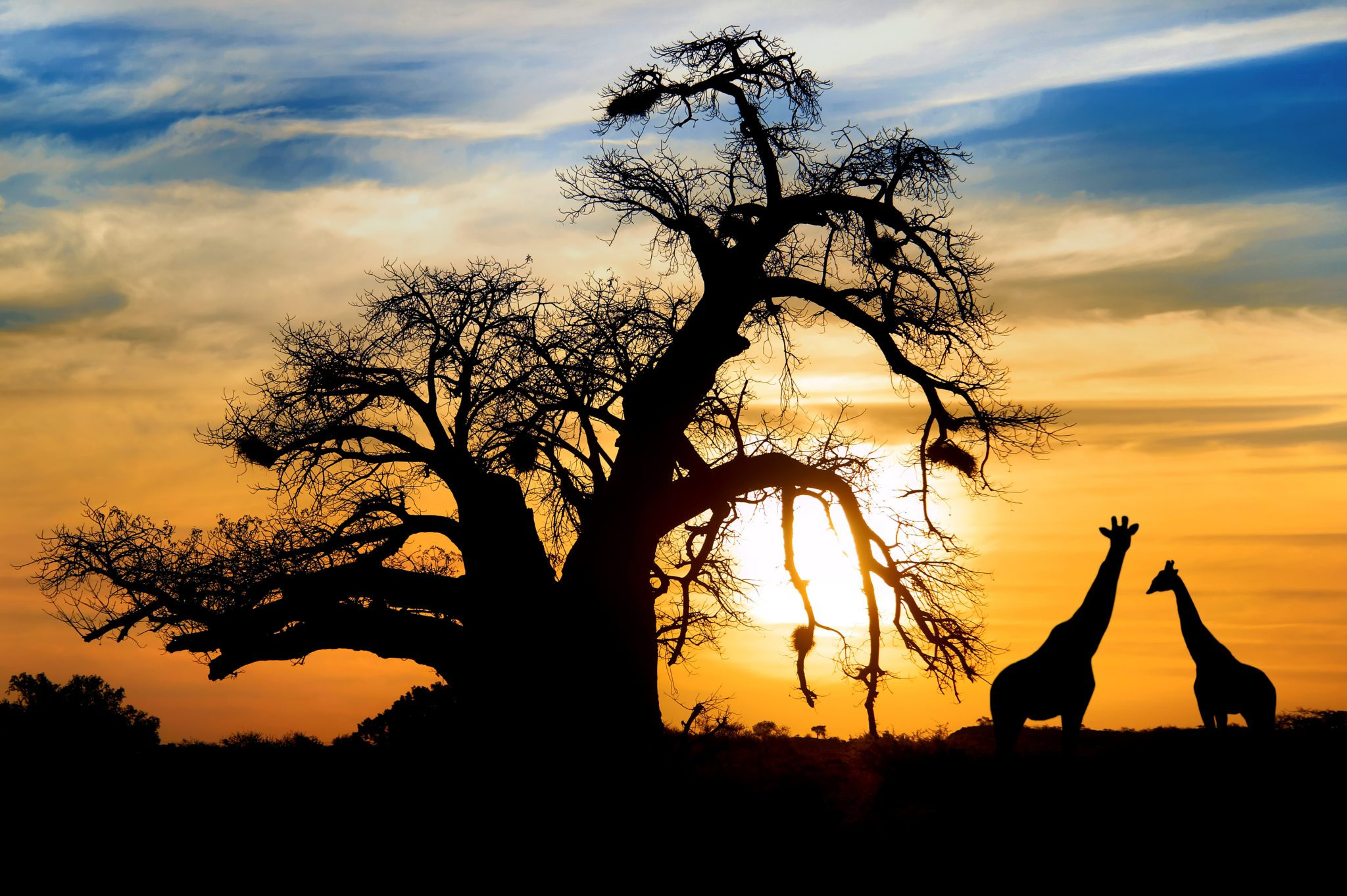 African Adventure – March 2016